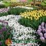ngàn hoa 2