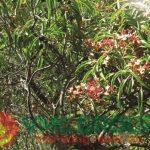 Hương đàn hương - VMC 1091S